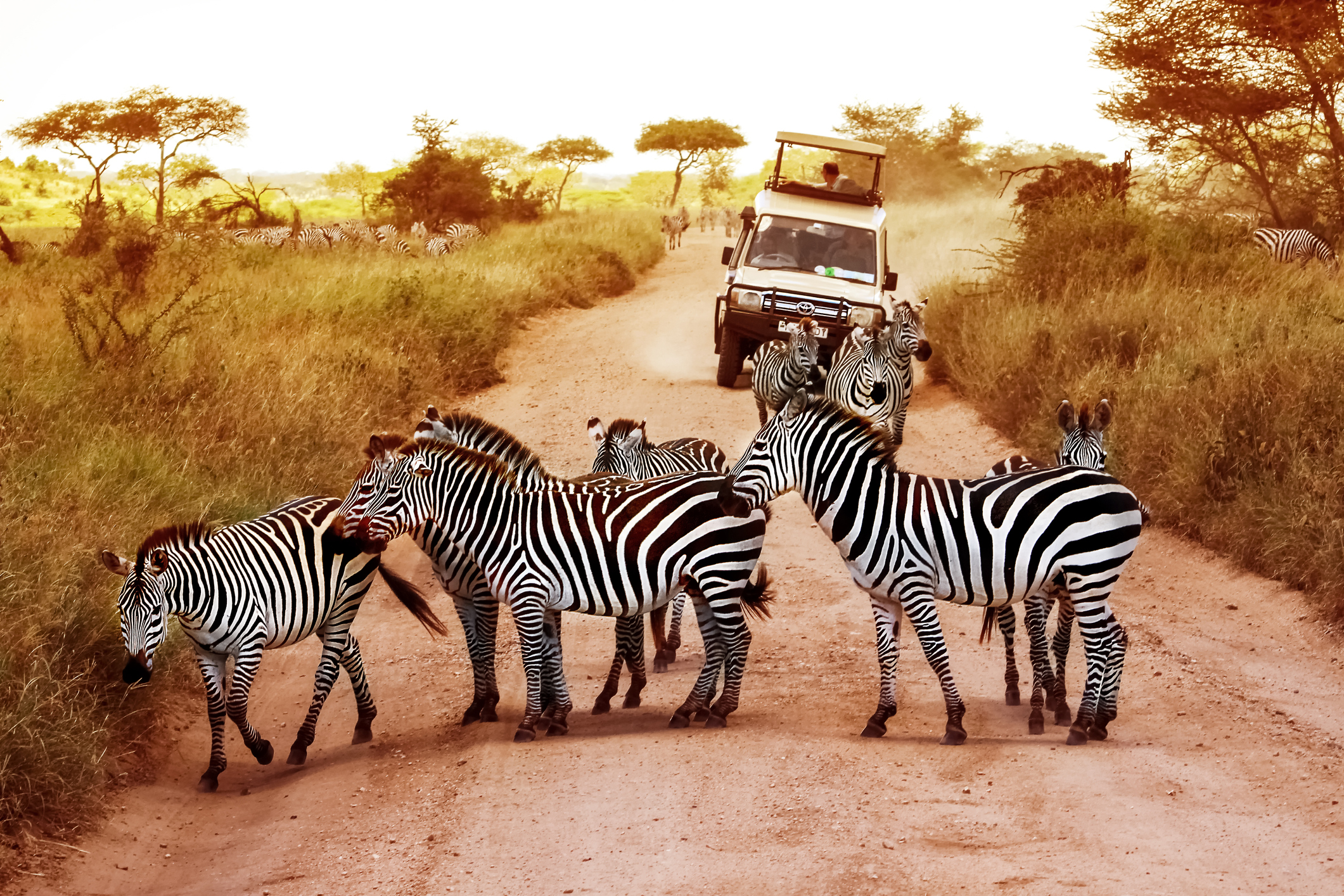 Serengeti-National-Park-Tansania-Virtuelle-Reisen-itravel